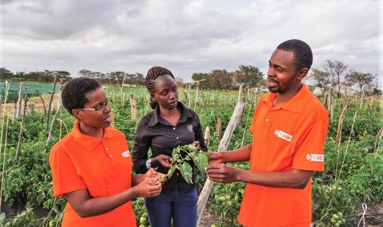 CABI in Kenya discussing plant and crop health