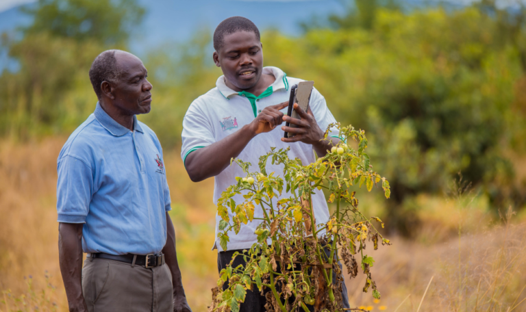 Two men standing in a field facing the camera discussing biological control of pests. One hold up an ipad to compare with a plant which is in front of them both