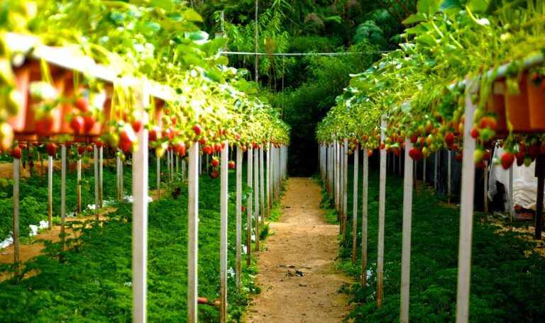 A fruit farm using biopesticides in Hungary