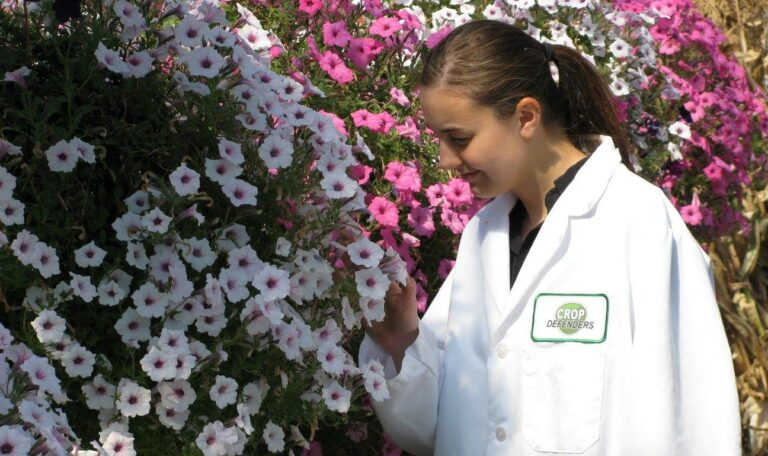 A young female with her hair in a low ponytail wearing a white coat with a clear 'Crop Defenders' badge examines a large collection of white flowers