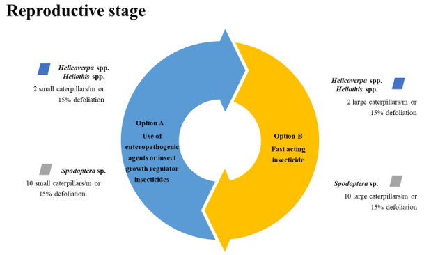 reproductive stage
